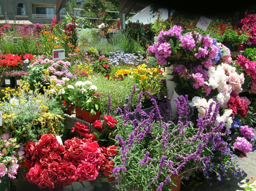 Image Result For Best Annual Flowers For Cutting Garden